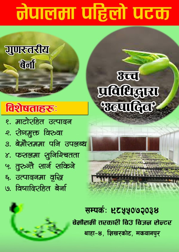 Plant-1526723778.JPG